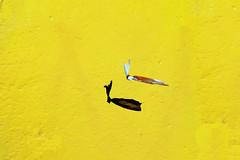 Una libellula cinese (meghimeg) Tags: 2020 rapallo vento wind plastica plastic giallo yellow muro wall ombra shadow sole sun libellula