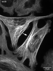 intercellular images