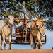 2019 - Cambodia - Kampong Louang - 9