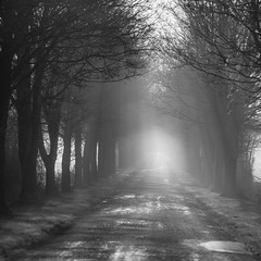 Highway to... (PhlippeC.) Tags: blackwhite noirblanc monochrome arbres mist tree fog brume brouillard ardennes route square carré nature