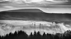 Morning Mists (l4ts) Tags: landscape derbyshire peakdistrict darkpeak goytvalley combsmoss mist trees blackwhite monochrome