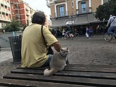 IMG_8650 (kriD1973) Tags: europa europe italia italy italien italie lombardia milano milan mailand lombardei lombardie pets haustiere animali domestici cat gatto katze chat pet cats gatti chats katzen gato felino animal animale tier