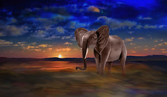 Sun Sets on Elephant (Rusty Russ) Tags: setting sun water sky elephant wild national geographic wildlife colorful day digital flickr country bright happy colour scenic america world sunset red nature blue white tree green art light cloud park landscape summer old new photoshop google bing yahoo stumbleupon getty creative composite manipulation hue pinterest blog twitter comons wiki pixel artistic topaz filter on1 sunshine image reddit tinder russ seidel facebook timber unique unusual fascinating