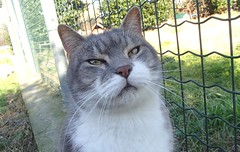 652 (bluefootedbooby) Tags: gatto cat chat gato
