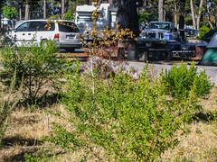 Campground 021 (davidseibold) Tags: america california morrobaystatepark sanluisobispocounty usa unitedstates bush jfflickr photosbydavid picnictable plant postedonflickr vehicle morrobay unitedstatesofamerica