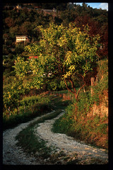 ... (tkachenko.as) Tags: autumn newafon film kodak e100vs abkhazia nature jupiter9 vintagelens