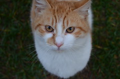 warming up2 (olguormanlar) Tags: cat cats 1855mm animal kedi kitlens outside coth5 nikkor nature