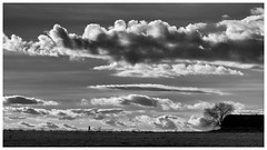 Horizonte (una cierta mirada) Tags: meco landscape winter bnw blackandwhite nature land silhouette cloudy clouds cloudscape tree sunset