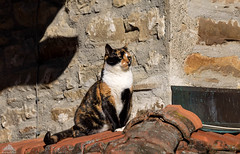 Happy Furry Sunny Friday ☼☼☼ (Xena*best friend*) Tags: shellyann catsontheroof catssunbathing cats whiskers feline katzen gatto gato chats furry fur pussycat feral tiger pets kittens kitty animals piedmontitaly piemonte canoneos760d italy wood woods wildanimals wild paws calico markings purr digitalrebelt6s canonef70300mmf456isusm flickr outdoor animal pet photo nature catlover coth fantasticnature coth5 cc100