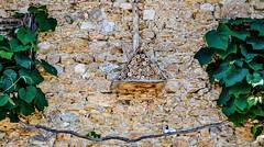 Self-service.... (balese13) Tags: 100nikon 1855mm berry d5000 nikonpassion notredame orsan yourbestoftoday balese bird centre feuille green insecte jardin leaf leaves nid nikon nikonistes oiseau pierre pixelistes prieuré roche vert 250v10f 500v20f 1000v40f 1500v60f