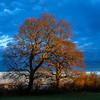 24 02 Glowing morning oaks, by StephenJones