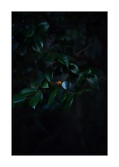 This work is 12/21 works taken on 2020/1/1 (shin ikegami) Tags: sony ilce7m2 a7ii sonycamera 50mm lomography lomoartlens newjupiter3 tokyo 単焦点 iso800 ndfilter light shadow 自然 nature naturephotography 玉ボケ bokeh depthoffield art artphotography japan earth asia portrait portraitphotography