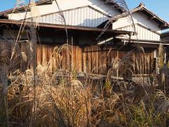 Hadano#105 (tetsuo5) Tags: 神奈川県 kanagawa 秦野 hadano 末広町 suehirocho dmcgx8 dgsummilux15mmf17