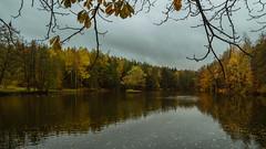 Herbst am Teich  (4) (berndtolksdorf1) Tags: deutschland thüringen teich wasser wald jahreszeit herbst autumn outdoor