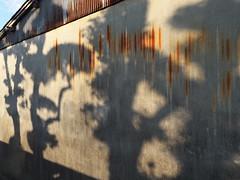 Hadano#103 (tetsuo5) Tags: 神奈川県 kanagawa 秦野 hadano 元町 motomachi dmcgx8 dgsummilux15mmf17