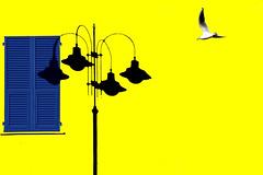Chi vola e chi no (meghimeg) Tags: 2020 lavagna finestra window persiana lampione ombra shadow sole sun gabbiano uccello bird seagull jalousie giallo yellow blu explore