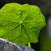 Pattern of a Leaf