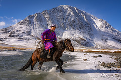 Crossing the River (David Swindler (ActionPhotoTours.com)) Tags: altai horse mongolia snow winter ice mountains rider