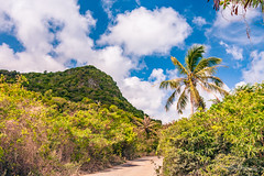 Tropical Isolation (dan@propeakphotography.com) Tags: achaepoint america blue blueskies bluesky clouds green guam jungle khkvisitjune2008 palmfronds ritidianbeach ritidianpoint spring touristattraction traveldestination travelandtourism tropical usa unitedstates yellow yigo