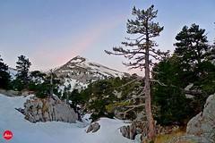 Arlas Peak (YellowSingle 单黄) Tags: tree cold snow adventure leica backcountry ski outdoor atlantic bearn pierrestmartin arlas peak range mountain pyrenees