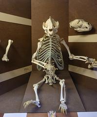 Giant Panda (Graham Knott) Tags: naturalhistorymuseum giantpanda