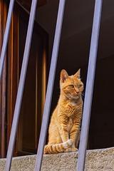Non ci sono gatti normali. - There are no ordinary cats. (Eugenio GV Costa) Tags: approvato gatto gatti cat cats animal animali domesrici pet