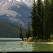 20180616_17 Trees on small beach by Maligne Lake, Jasper National Park, Alberta, Canada