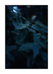 This work is 15/21 works taken on 2020/1/1 (shin ikegami) Tags: sony ilce7m2 a7ii sonycamera 50mm lomography lomoartlens newjupiter3 tokyo 単焦点 iso800 ndfilter light shadow 自然 nature naturephotography 玉ボケ bokeh depthoffield art artphotography japan earth asia portrait portraitphotography