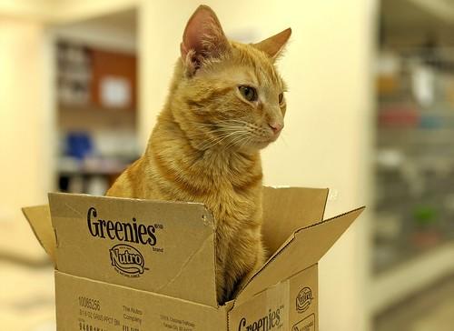 Unpack box and wait