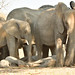 Olifant- Elephants