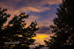 Summer Sunset (Photographybyjw) Tags: summer sunset soft golden warm this cloudy north carolina ©photographybyjw trees foliage rural country