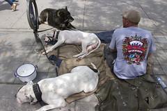 Winners (klauslang99) Tags: klauslang streetphotography poverty dogs bedding toronto