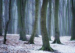 Winterwald (Petra Runge) Tags: nature trees forest woodland winter buchenwald wald bäume landscape landschaft natur beeches