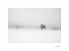 Las formas del invierno (E. Pardo) Tags: invierno winter árboles trees bäume nieve snow schnee nebel niebla fog formen formas forms steiermark austria