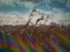 Photo of Winter Psychedelia (pinhole lens)