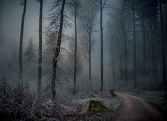 Through the Forest (ceca67) Tags: forest nature magic road walk foggy winter scenery trees outside outdoors frost landscape wonderland