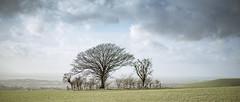 A Clump on Fontmell Down (Steve Dewey) Tags: 2351 sonya7r2 trees widescreen dorset landscape treescape canon50mmf18 fdmount manualfocus clump copse