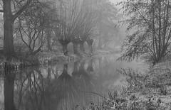 going into (Woewwesch) Tags: fog mist channel blackwhite reflections walk morning