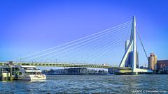 Rotterdam, Netherlands: Erasmusbrug crossing the Nieuwe Maas (nabobswims) Tags: bridge erasmusbrug hdr highdynamicrange ilce6000 lightroom mirrorless nl nabob nabobswims netherlands nieuwemaas photomatix river rotterdam sel18105g sonya6000 zuidholland