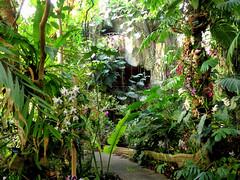 Mille & Une orchidées (Raymonde Contensous) Tags: paris fleurs orchidées plantes nature exposition mnhn jardindesplantes grandeserrejardindesplantes milleetuneorchidées
