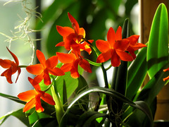 Orchidées (Raymonde Contensous) Tags: paris fleurs orchidées plantes nature exposition mnhn jardindesplantes grandeserrejardindesplantes milleetuneorchidées