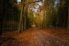 Unser Wald  (29) (berndtolksdorf1) Tags: deutschland thüringen jahreszeit herbst autumn wald bäume forest laub landschaft landscape herbstfarben outdoor weg