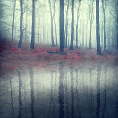 forest of illusions (Dyrk.Wyst) Tags: doubleexposure foggyforest trees autumn dreamy reflection photomanipulation redground foliage mystical textures ripples misty calm outside outdoor nature woods landscape symmetry