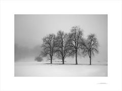 Las formas del invierno (E. Pardo) Tags: invierno winter árboles trees bäume schnee nieve snow fog niebla nebel paisaje landscape landschaft formas formen forms steiermark austria