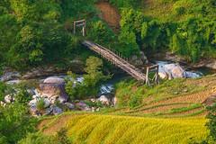 _Y2U6905.0913.Bản Nhùng.Hoàng Su Phì.Hà Giang (hoanglongphoto) Tags: asian asia vietnam northvietnam river landscape scenery northernvietnam terracedfields northeastvietnam vietnamlandscape vietnamscenery flanksmountain sunshine canon sunny suspensionbridge theforest hoàngsuphì hàgiang đôngbắc canonef70200mmf28lisiiusm canoneos1dx seasonharvest suối phongcảnh nắng sườnnúi mùagặt ruộngbậcthang lúachín bảnnhùng phongcảnhhàgiang cầutreo hoanglongphoto