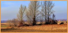 Drzewa. (andrzejskałuba) Tags: poland polska pieszyce dolnyśląsk silesia sudety europe plant plants panasonicdmcfz200 lumix mountainsofowls mountains natura nature natural natureshot natureworld niebieski niebo naturephotographer nopeople beautiful beauty blue beautyofnature brown brązowy view widok krzewy krajobraz sky shadow shrub cień color colour clouds chmury las landscape zieleń zima winter pole field flora floral focusonforeground day drzewa drzewo domy trawa trees tree twig green grass gałązka górysowie góry houses outdoor żółty yellow toits dachy okna windows 100v10f 1000v40f