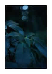 This work is 18/21 works taken on 2020/1/1 (shin ikegami) Tags: sony ilce7m2 a7ii sonycamera 50mm lomography lomoartlens newjupiter3 tokyo 単焦点 iso800 ndfilter light shadow 自然 nature naturephotography 玉ボケ bokeh depthoffield art artphotography japan earth asia portrait portraitphotography
