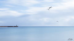 Binic_0917-44-2 (Mich.Ka) Tags: binic breizh bretagne bird bleu blue côtedegoelo côtesdarmor digue harbourg jettée lighthouse longexposure mer minimalim minimalisme mouette oiseau phare port poselongue sea seagull