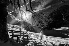 empty bench . (helmet13) Tags: winter bw snow tree sunshine backlight landscape branches silence trunk emptybench d800e peaceful germany bavaria thealps allgäu trettachtal mountains world100f aoi peaceaward platinumpeaceaward flickrheroes 300faves
