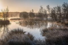 Koud en nevelig (Pieter ( PPoot )) Tags: vorst zonsopkomst nevel koud dwingelderveld
